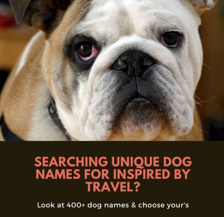 Travel Dog Names