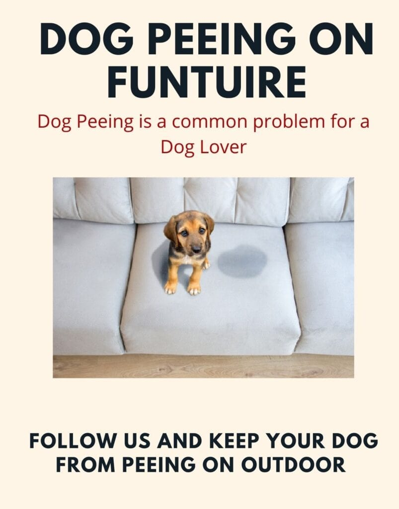 how to keep my dog from peeing on my outdoor furniture