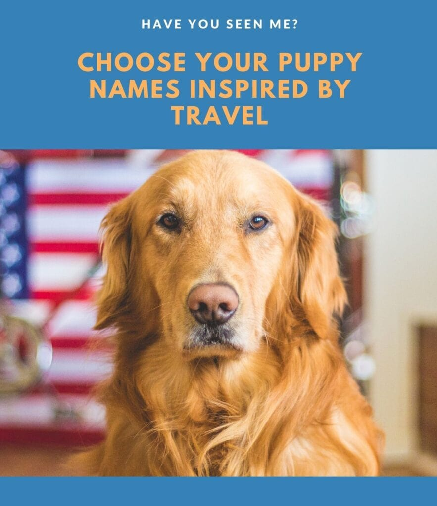 dog names inspired by travel