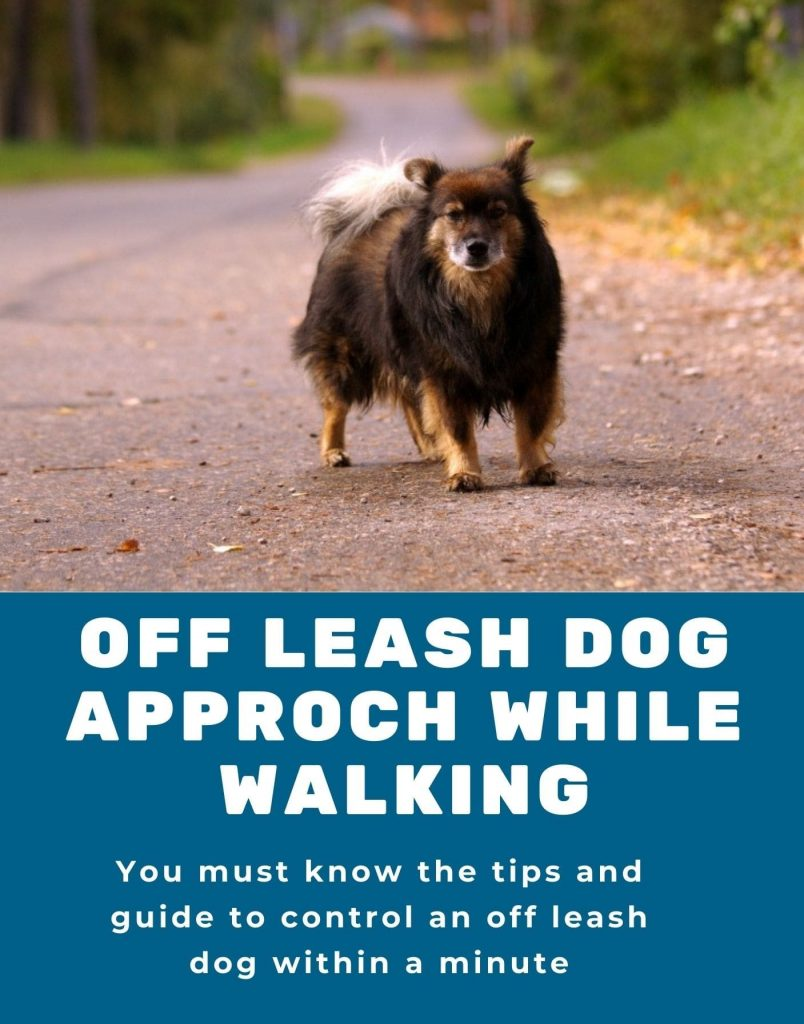 an off-leash dog approaches you while walking a dog