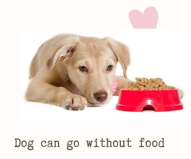 How long can a dog go without food