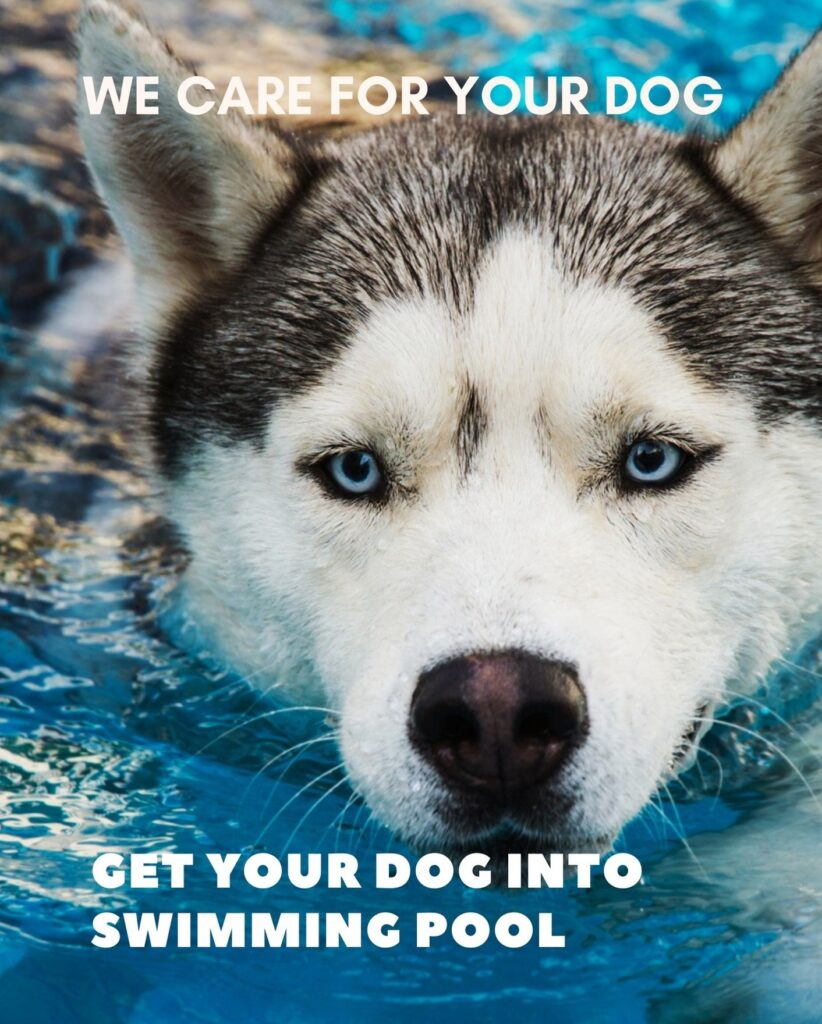 How to get a dog into a swimming pool