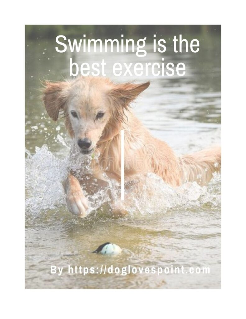 Is Swimming Good for a Dog?