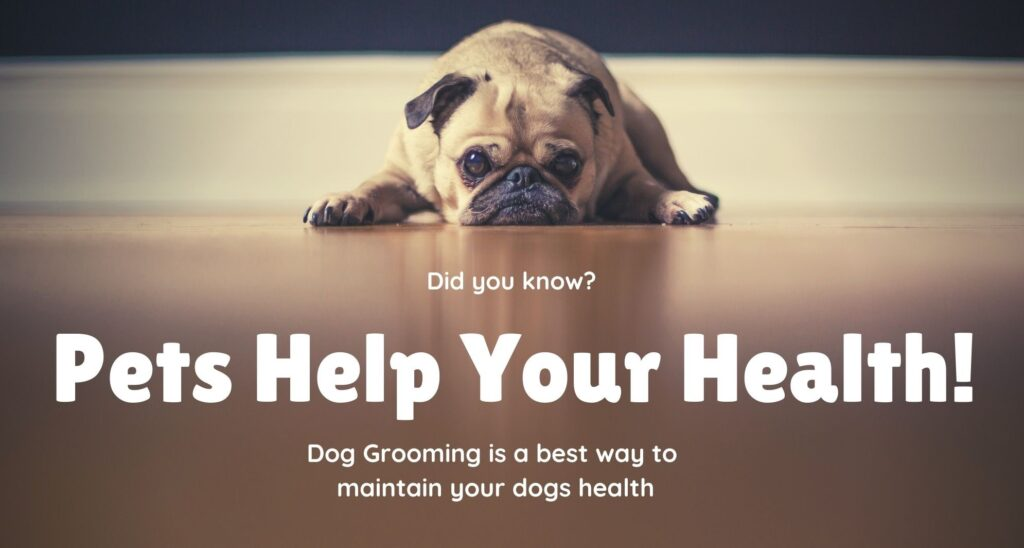 what is dog grooming