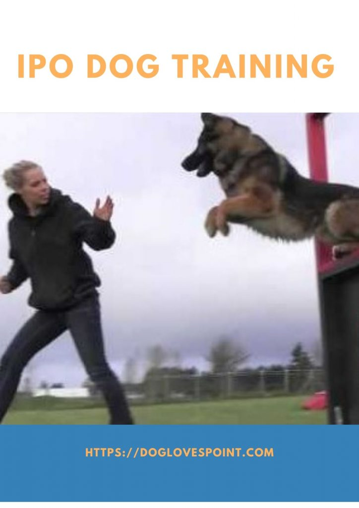 what is IPO Dog Training