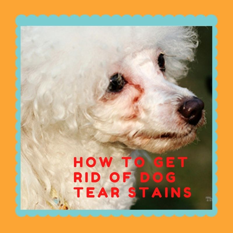 how to get rid of dog tear stain